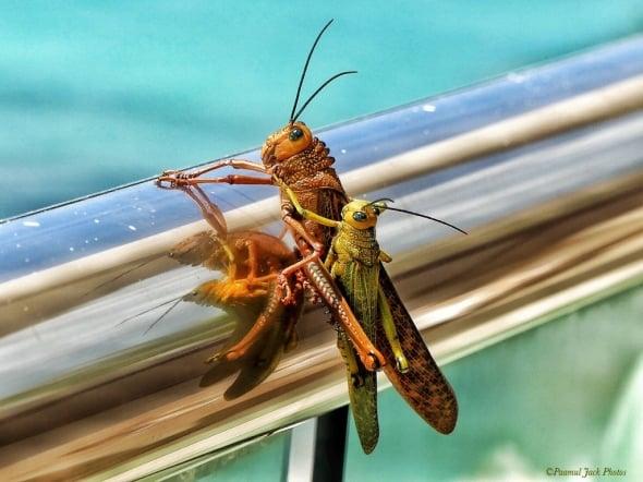 Love Reflection - Locusts on a Railing