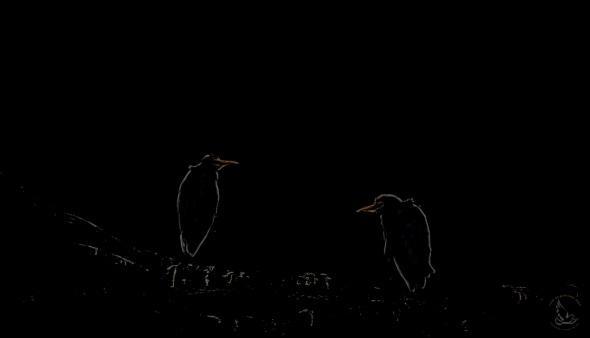 Cattle Egret Against Strong Backlight