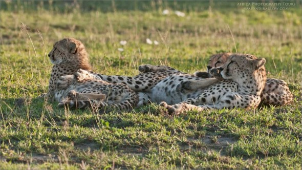Africa Photo Tours