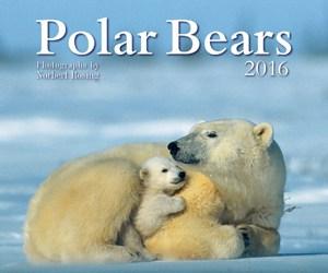 polar-bears-2016
