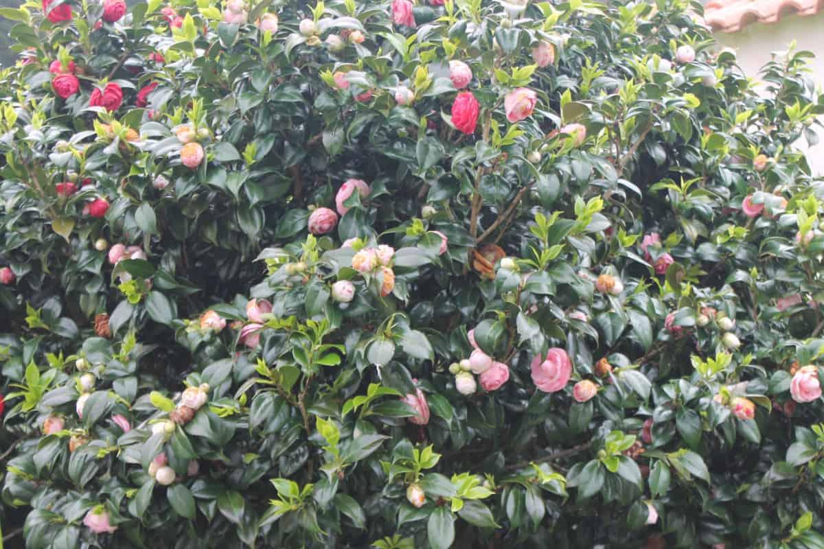 Flora & Scenery