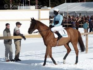 Horse (Equus ferus caballus) (10)