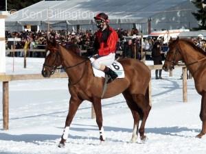 Horse (Equus ferus caballus) (11)
