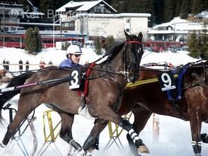 Horse (Equus ferus caballus) (4)
