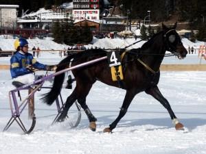 Horse (Equus ferus caballus) (7)