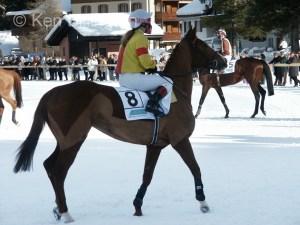Horse (Equus ferus caballus) (8)