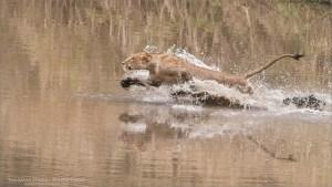 Water Dash! Serengeti Tour