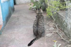 My Wild Cats