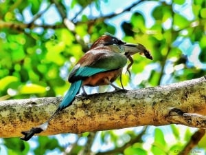 A Minute to Live - Yucatan Motmot Lunch