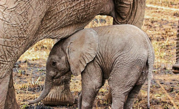Zimbabwe To Send Baby Elephants to China in Defiance of International Resolution