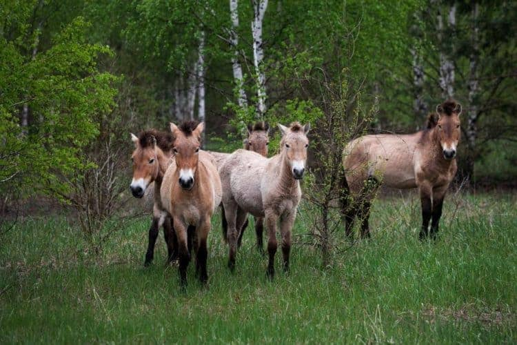 Animals Rule Chernobyl 30 Years After Nuclear Disaster