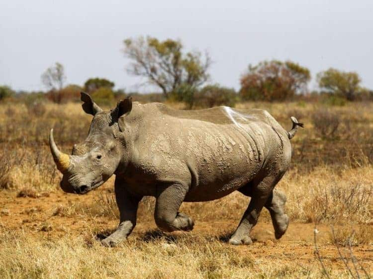 Tracking wildlife for science could actually help poachers