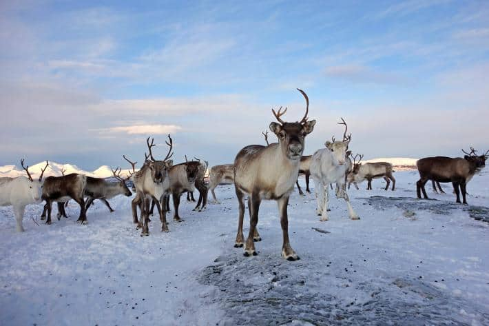 Dodging Wind Farms and Bullets in the Arctic