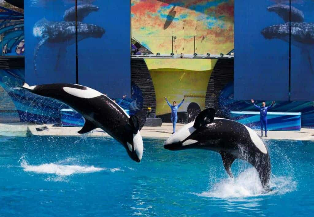 POLL: Should orca entertainment shows be universally banned?
