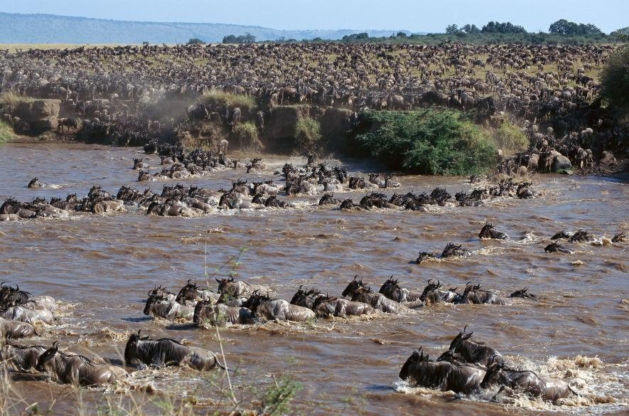 How 2 Million Pounds of Rotting Flesh Helps the Serengeti