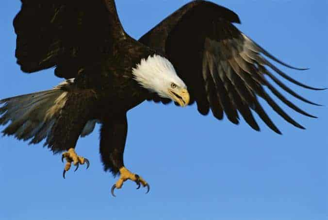 Video: Let's Not Force Eagles to Fight Rogue Drones