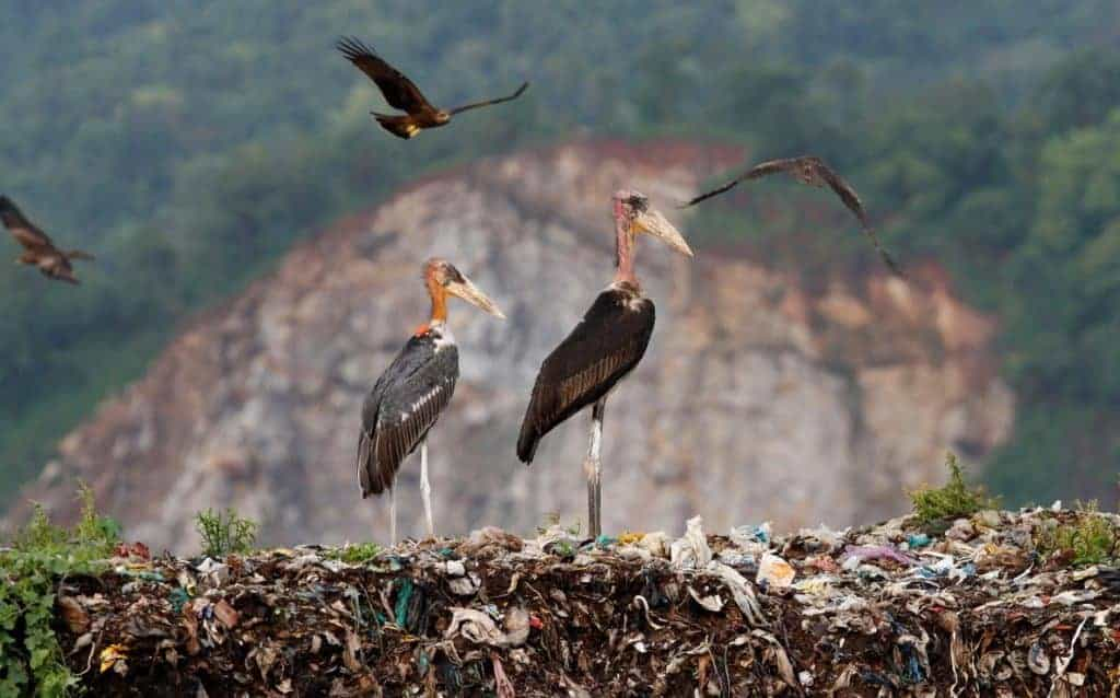 All-Women 'Army' Protecting Rare Bird in India