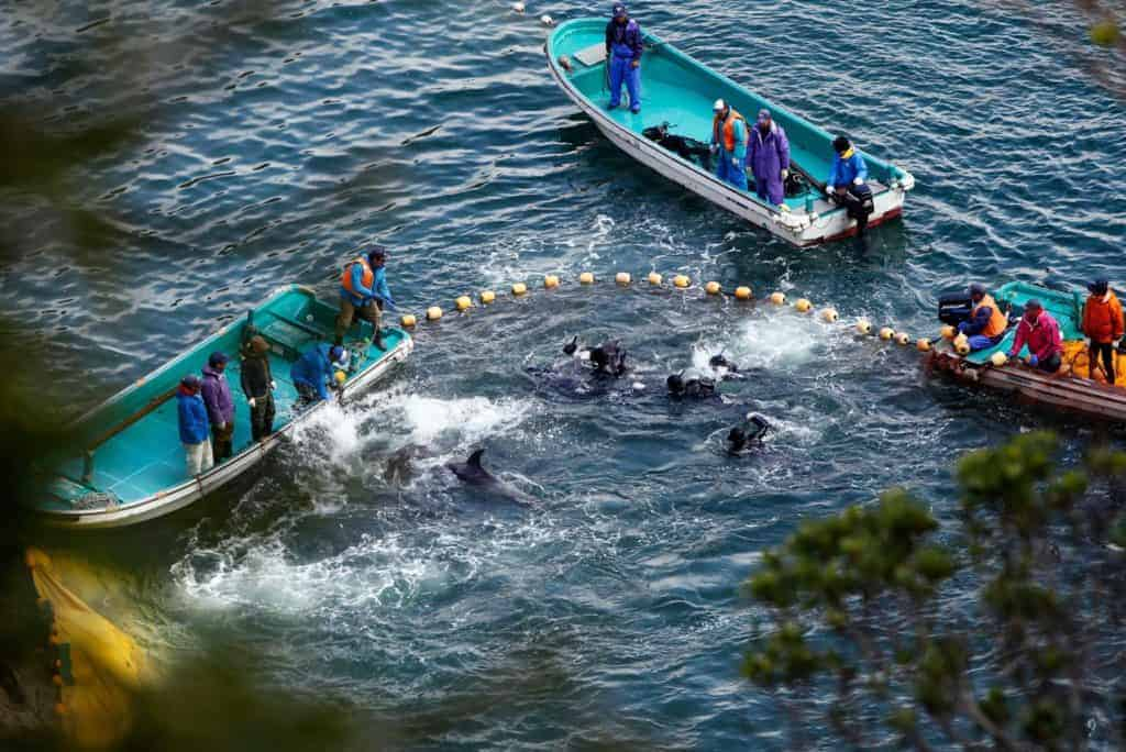 POLL: Should Japan's killing of dolphins and whales be stopped?