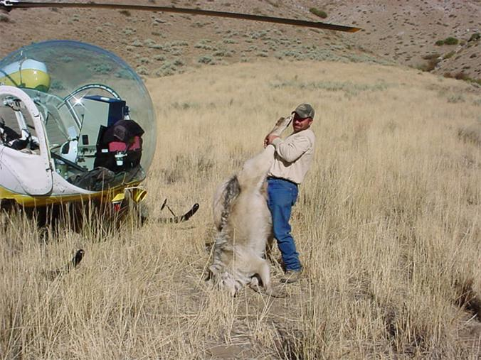 "POLL: Should Congress disband Wildlife ""Killing"" Services?"