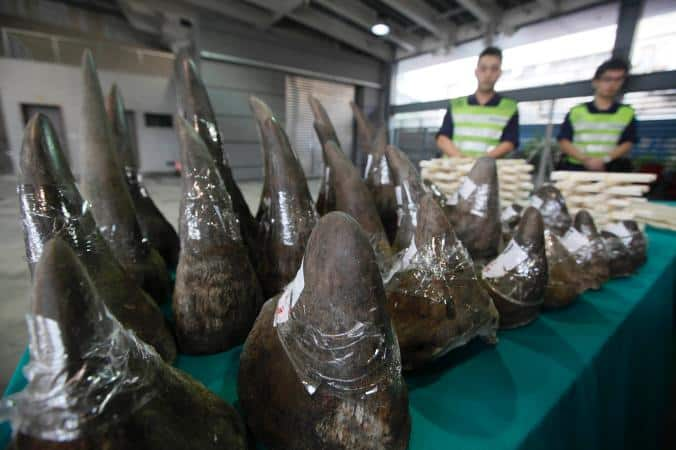 POLL: Should fake rhino horn be banned?