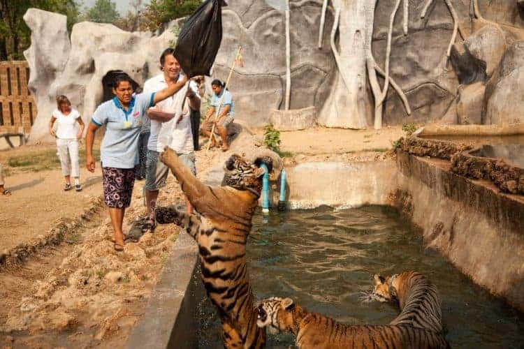 POLL: Should ticket sales to cruel wildlife attractions be banned?
