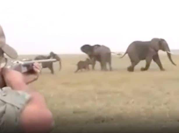Elephants take revenge after hunter shoots herd member dead while being told 'hit it between the eyes'