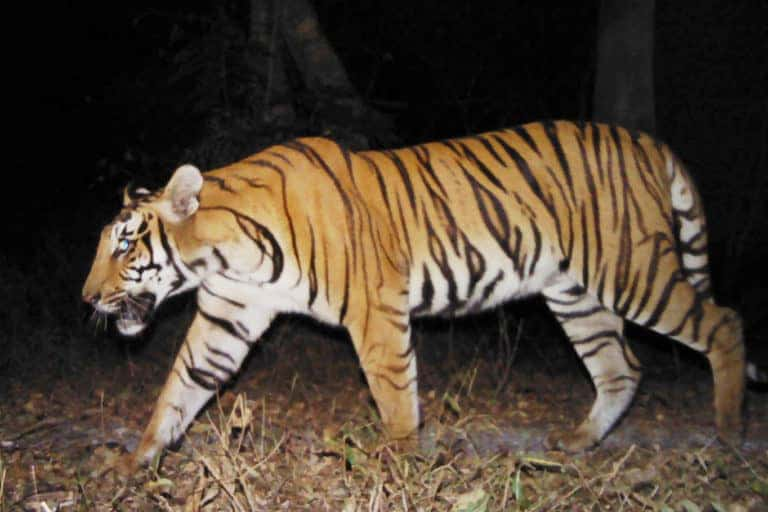 Protected landscape across India-Bhutan border a refuge for wildlife during armed conflict