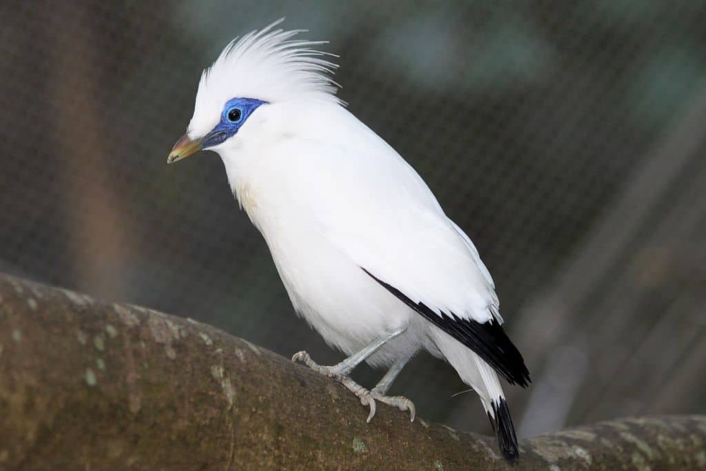Indonesia's birds being wiped out by pet trade