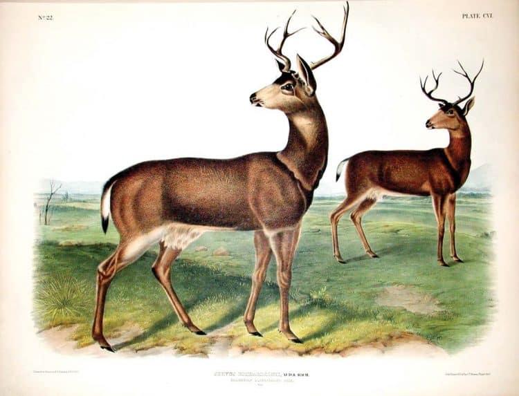 Rare Art Works by John James Audubon at Auction on December 5th Part III
