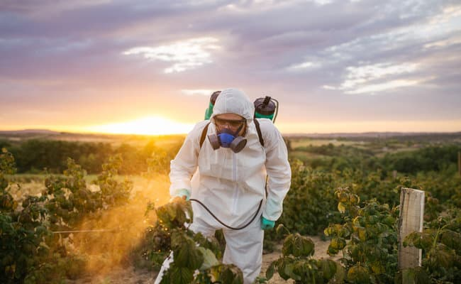 Victory! European Union Bans Neonic Pesticides