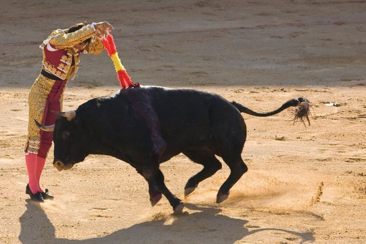 LOVE Spain, HATE Bullfighting