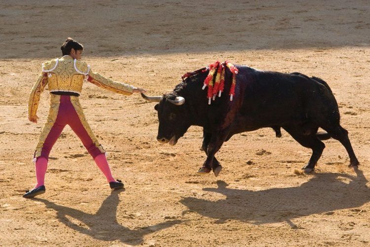 Spanish state TV makes U-turn over live bullfights
