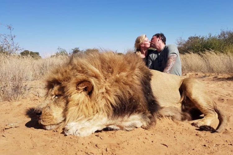 Sick couple kiss to celebrate killing magnificent lion in horrifying picture
