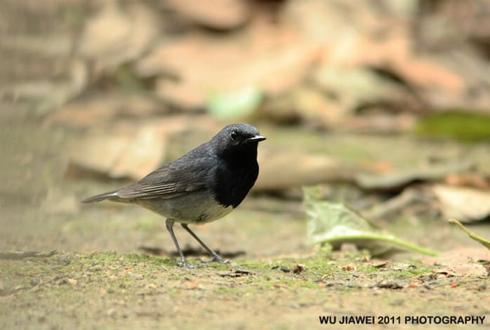 Sensational bird discovery in China