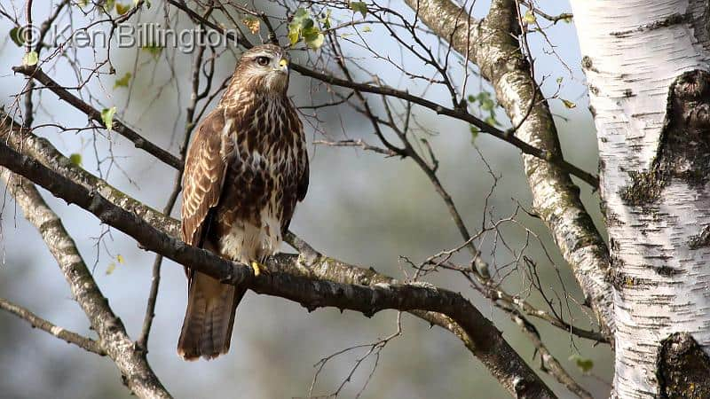 Community service for former gamekeeper who poisoned four buzzards