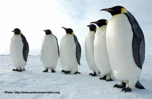 Protecting Penguins and More in Antarctica