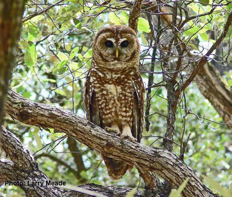 Agency Announces Additional Habitat Protection for Northern Spotted Owl