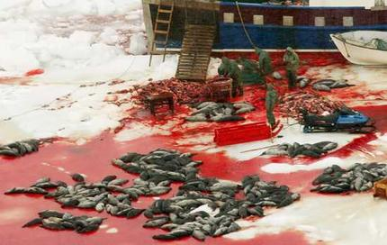 Is this the beginning of the end of the Canadian commercial seal hunt?