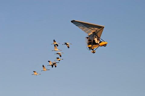 Legal Problem Grounds a Bird Migration
