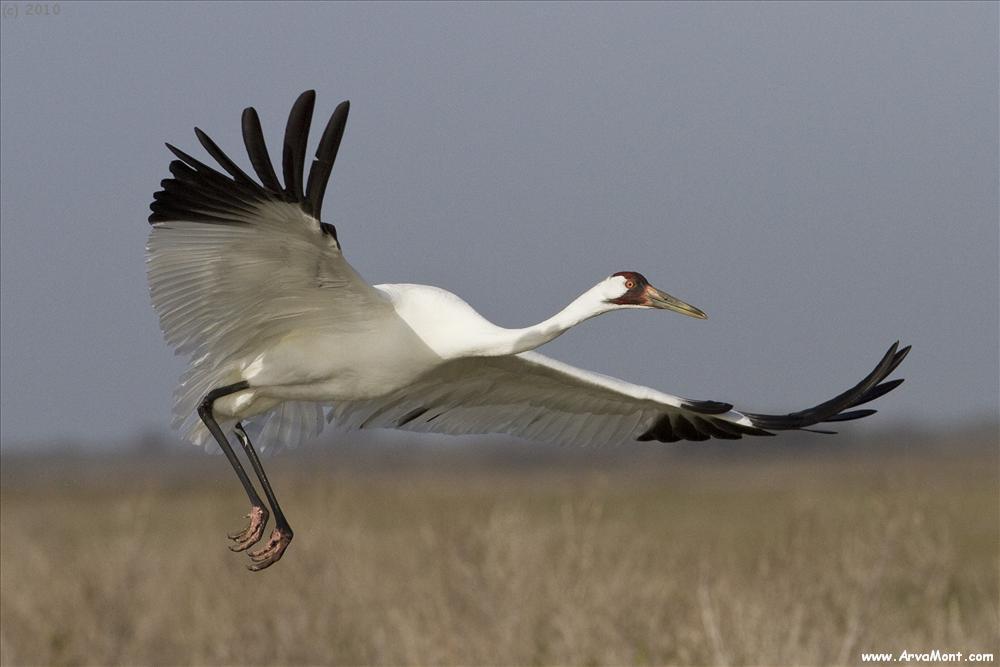 Wind Turbines Still Killing Hundreds of Thousands of Birds