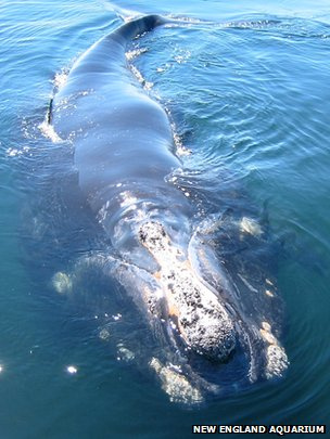 Whales 'stressed by ocean noise'