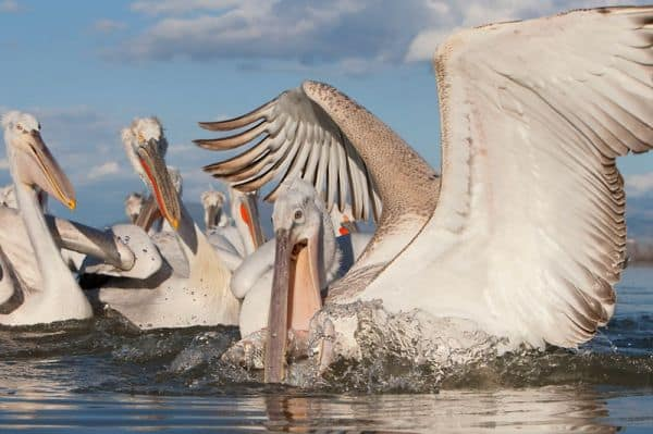 Kazakhstan Names Large Inland Delta
