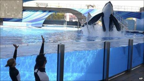 SeaWorld sued over 'enslaved' killer whales