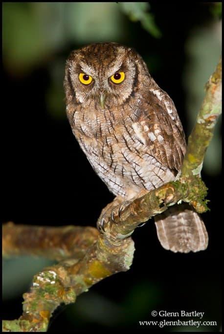 Birds of Ecuador in the Lowlands