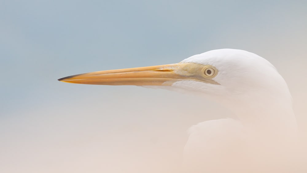 Bird Photography off the Beaten Path   By Fabiola Forns