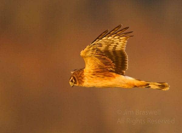 Birds of the Prairie, Part 1