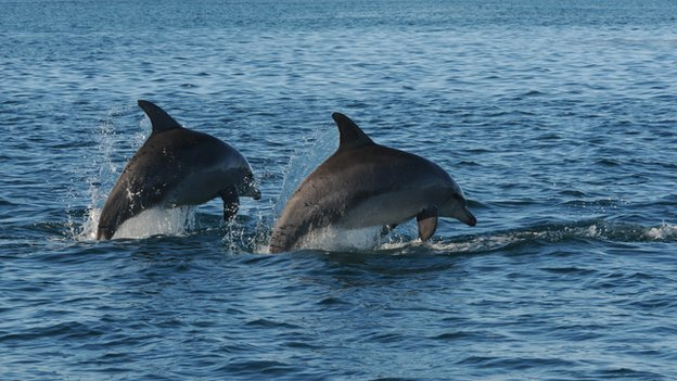 Bottlenose dolphins: 'Gangs' run society, scientists say