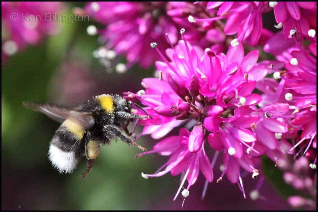 Pesticides Hit Queen Bee Numbers