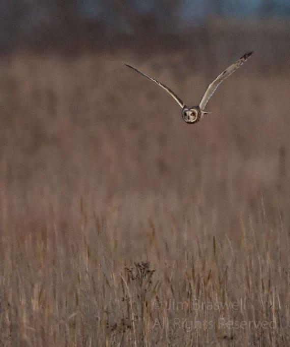 Birds of the Prairie, Part 2