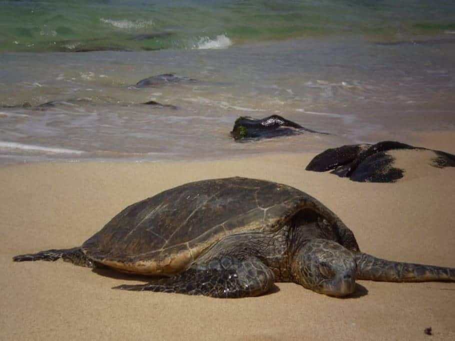 Deadly Fishery Expansion Planned into California's Sea Turtle Protected Area